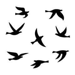 Vector silhouette of a flock of birds.