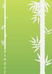 Bamboo tree on green background