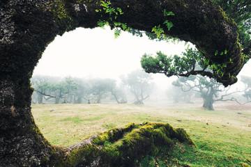 Krummer, gebogener Baum umrahmt Aussicht auf nebliges Feld mit Bäumen Fotoväggar