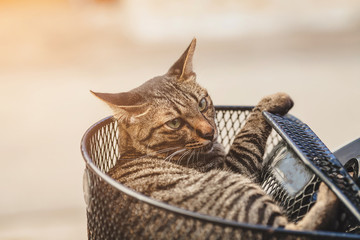Cat relaxing in the basket against sunlight background