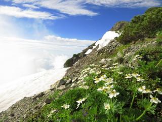 白馬岳(ハクサンイチゲ)