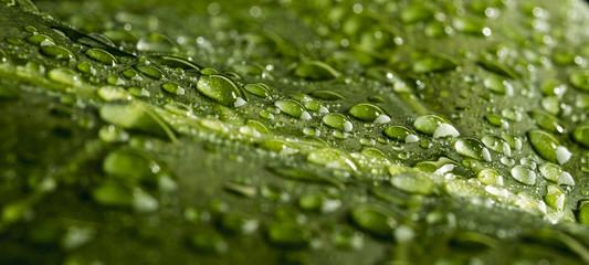monstera leaf in droplets
