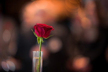 A single red rose in a glass against a dark background that is lit up by bokeh of warm lights