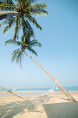 tropical paradise beach with caribbean sea and coconut palm