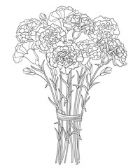 Vector bouquet with outline Carnation or Clove flower in black, bud and leaf isolated on white background. Ornate carnation bunch for greeting design or coloring book. Mother day symbol in contour.