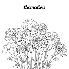 Vector bouquet with outline Carnation or Clove flower in black, bud and foliage isolated on white background. Ornate carnation bunch for greeting design or coloring book. Contour Mother day symbol.