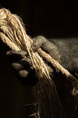 Mano gorila agarrando cuerda