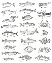 Fish and seafood hand drawn graphic illustration