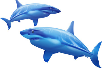 Sharks on a white background
