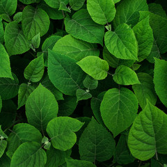 Green leaves pattern. Nature background
