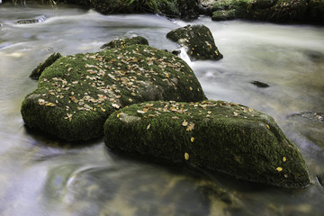 Mossy rocks in stream covered with leaves
