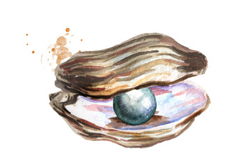 Black pearl in the shell. Hand drawn watercolor illustration isolated on white background