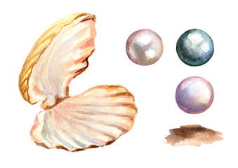 Pearls and shell set. Hand drawn watercolor illustration  isolated on white background