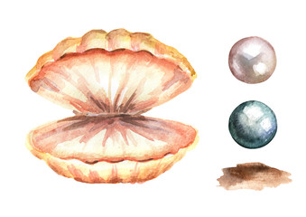 Pearls and shell set. Hand drawn watercolor illustration, isolated on white background