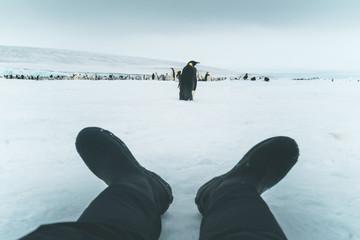 Exploring the Emperor Penguin Colony - Antarctica