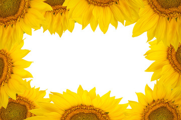 Frame of large sunflower flowers isolated on white background.