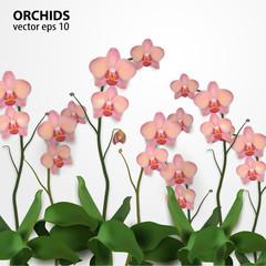 Flower Orchids Vector Illustration rose