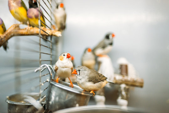 Domestic birds sitting on a stick in pet shop