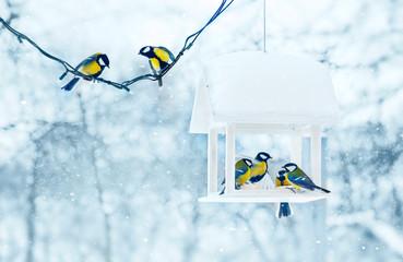 Fototapeta premium Sikora ptaków w biały drewniany karmnik zimowy śnieżny mroźny dzień
