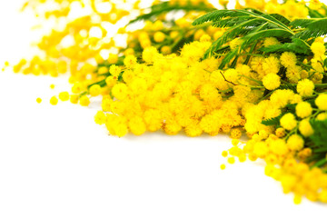 Fotoväggar - Mother's Day background. Mimosa spring flowers border isolated on white