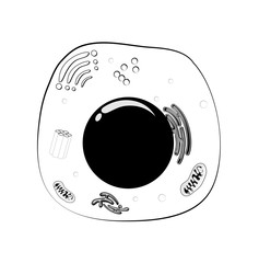 Animal cell structure. black and white Vector
