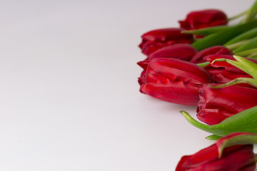 Floral background. Red tulips on white background.