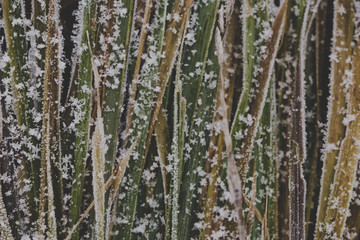 Abstract nature background, grass covered with ice, garden during winter time