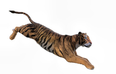 3d rendering of Siberian tiger also known as the Amur Tiger on white background