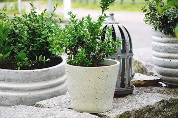 Stone garden arrangement at house entrance with green and white plants and concrete plant pots. Horizontal close up.