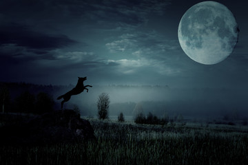Wolf jumps and howls to the moon.