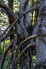 タイのジャングル