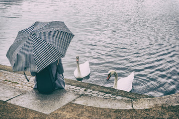 City park lifestyle scene of woman relaxing by pond feeding two swans outdoor. Person holding umbrella under rain sitting at urban public area. Weekend activity.