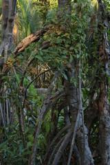 アジアの森の木