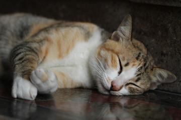 Tabby cat relaxation on stone floor, napping, fluffy kitten sleeping,
