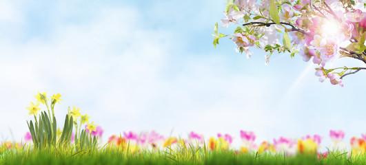 Endlich! der Frühling kommt.