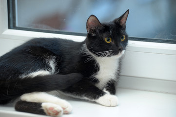 Black and white cat on a windowsill