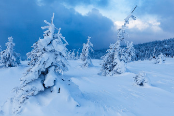 Beautiful winter forest of Beskid Slaski