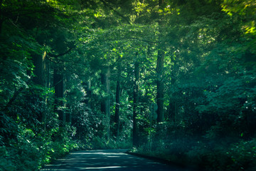 Driving through think forests at foothills of Mount Fuji, Japan