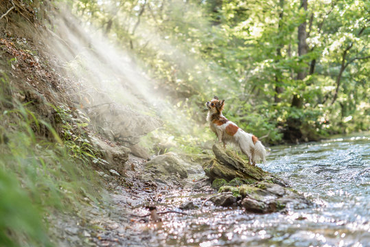 a small dog on a stone near a river in the light