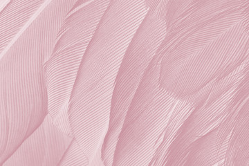Photo sur Toile Les Textures Beautiful Caral Blush violet vintage color trends feather texture background