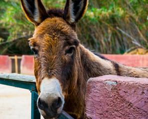 Photo sur Plexiglas Ane A portrait of donkey in a farm in Greece
