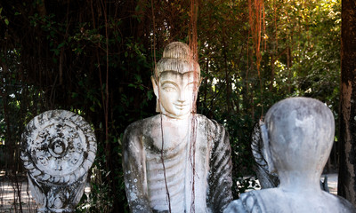 White Buddha statue with black stain under the Banyan tree with shadows and sunlight.The monastery is place of religious importance and public for general people either Thai and foreign visitors.