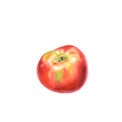 Botanical watercolor illustration of red ripe Apple isolated on a white background.