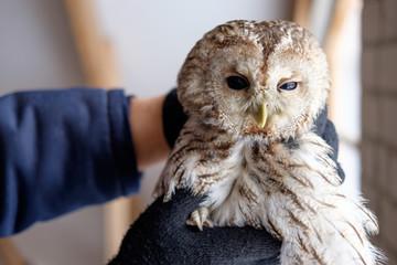 zoo worker holding owl in hands