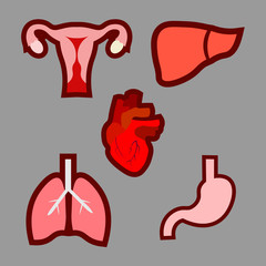 Cartoon human organs set. Anatomy of body. Reproductive system, Lungs, Uterus, stomach, heart, liver illustrations