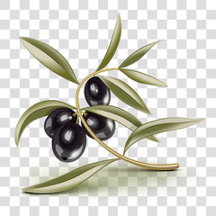 Transparent editable Black olives branch