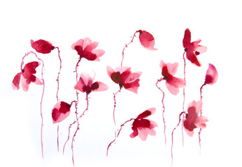 Watercolor painting of red poppy flower on white background