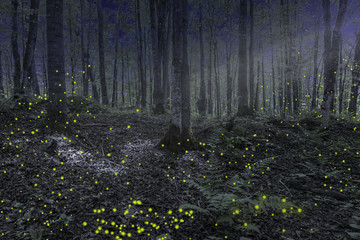 Night in the forest in Michigan