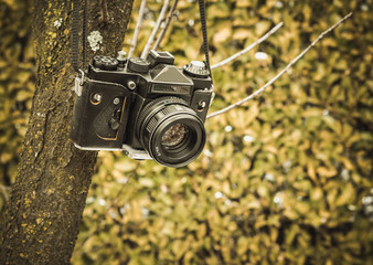 Old analog camera hanging on a tree. Vintage color tone.