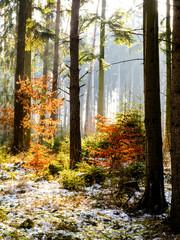 Forest on Hradistky Vrch near Konstantinovy Lazne in the morning